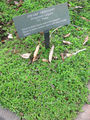Origanum vulgare.jpg