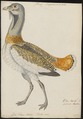 Otis tarda - 1743-1817 - Print - Iconographia Zoologica - Special Collections University of Amsterdam - UBA01 IZ17200007.tif