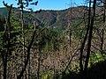 Ovde žive medvedi - panoramio (1).jpg