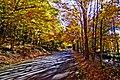 Owl Creek Road - Flickr - dok1.jpg