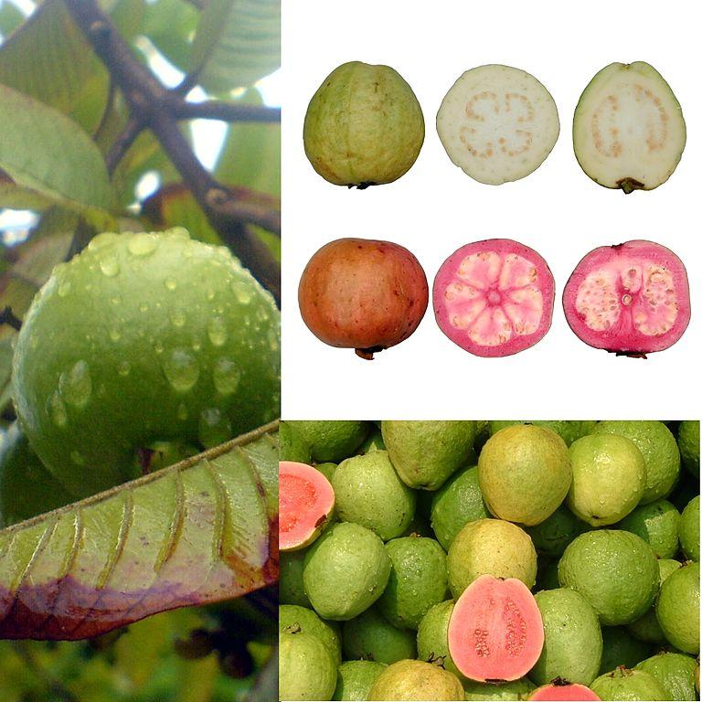 Guajáva hrušková - guave
