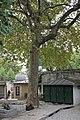 Père-Lachaise - Platane commun 01.jpg