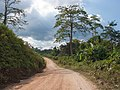 Palawan, Philippines, Dirt track in the middle of Palawan wilderness.jpg