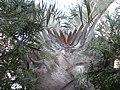 Palmeira - panoramio (1).jpg