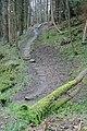 Pannierway, Carr Wood - geograph.org.uk - 375853.jpg