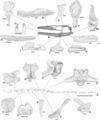 Pannoniasaurus.png