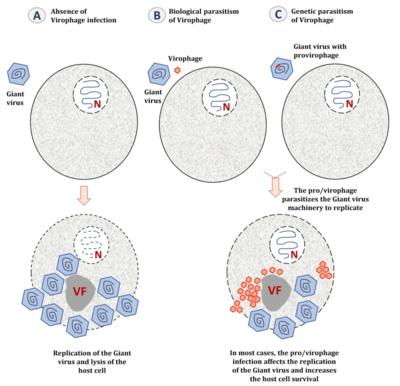 vírusok 2 llare 300 pare hpv pozitív kolposzkópia