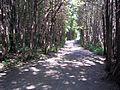 Parc-nature du Bois-de-l-ile-Bizard 48.jpg