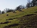 Pasture, Ibstone - geograph.org.uk - 295232.jpg