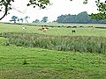 Pasture at Boothby, near Lanercost - geograph.org.uk - 207940.jpg