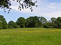 Pasture between High Corner and Dockens Water, New Forest - geograph.org.uk - 184404.jpg
