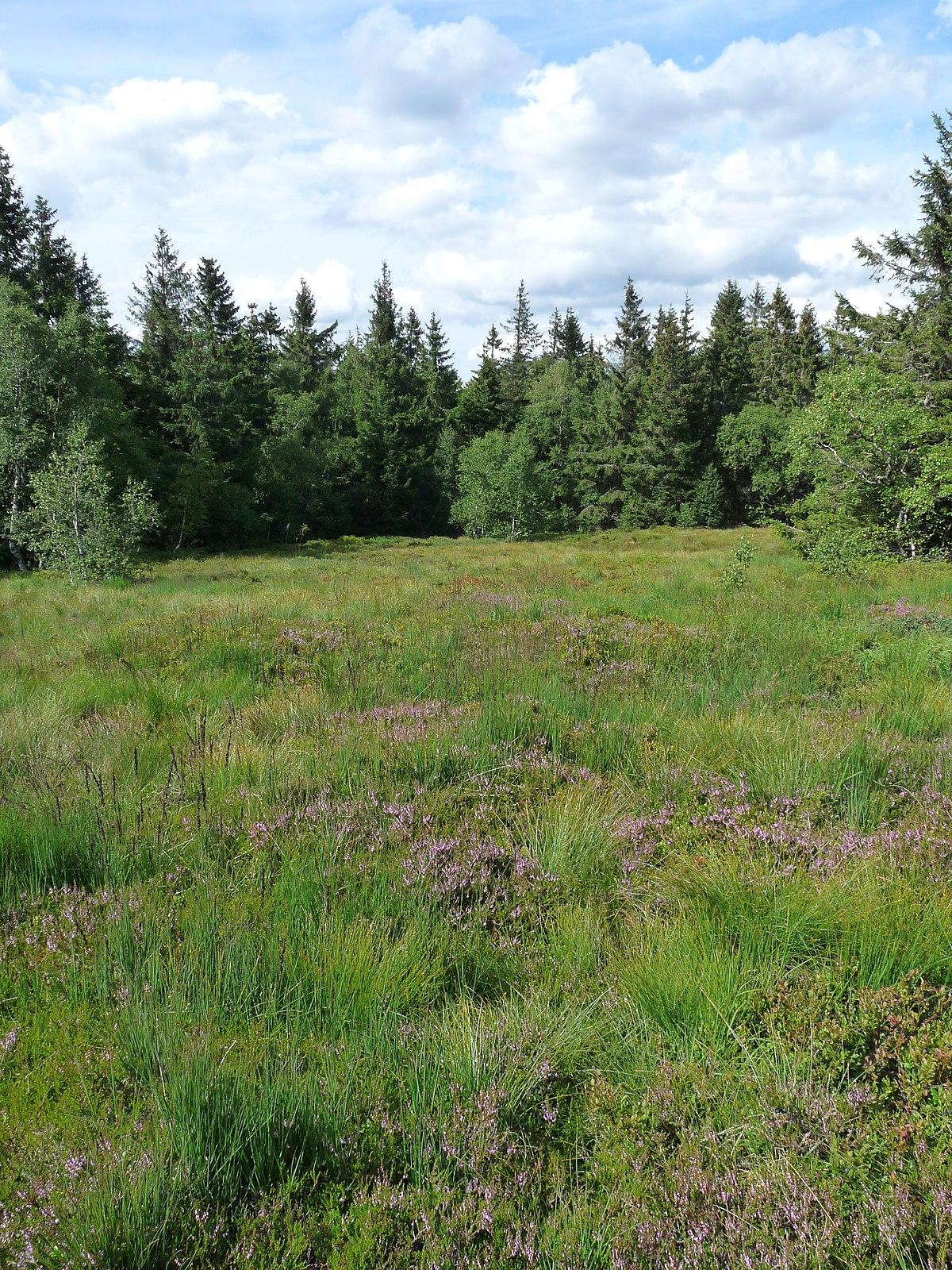 File paysage de tourbi re jardin d 39 altitude du haut - Jardin d altitude du haut chitelet ...