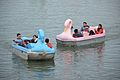 Pedalos - Sukhna Lake - Chandigarh 2016-08-07 8936.JPG
