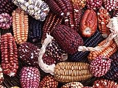 Maize en Perú
