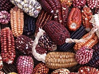 Peruvian cuisine - Peruvian corn