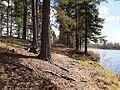 Petäjävesi - trail.jpg