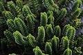 Pflanze im Nationalpark Niedersächsisches Wattenmeer (Wangerooge).jpg