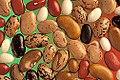 Phaseolus vulgaris seed.jpg