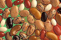 A variety of bean seeds.