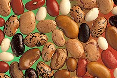 Pulse (legume) - Wikipedia, the free encyclopedia