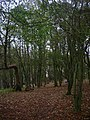 Piddingworth Plantation - geograph.org.uk - 596364.jpg