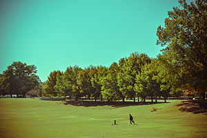 Parks in Atlanta - The meadow in Piedmont Park
