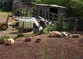 Pigs, Churscombe - geograph.org.uk - 765245.jpg