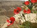 PikiWiki Israel 30048 Geography of Israel.JPG