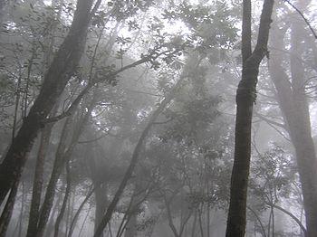 Pineforest1.jpg