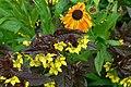 Plas Newydd (Anglesey) - Terrassengärten Untere Terrasse 9.jpg