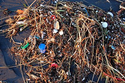 An example of sea pollution which the conference sought to avert. Plastic Ocean (4408273247).jpg