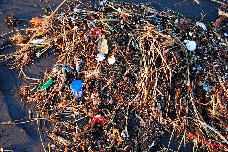 File:Plastic Ocean (4408273247).jpg