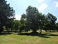 Plaza - panoramio (18).jpg