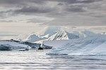 Pleneau Island (47284622012).jpg