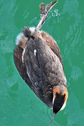 У птиц лапы или ноги