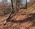 Poertschach Bannwaldweg im Herbst 16112015 9050.jpg