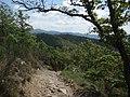 Poggio Falzoli dal sentiero 50 - panoramio.jpg