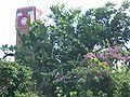 Poh-San-Teng-garden-2288.jpg
