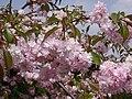 Poland. Warsaw. Powsin. Botanical Garden 107.jpg