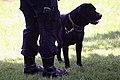Policijska brigada psi 3.jpg