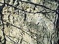 Poluvsie - skalní jehla (9).jpg