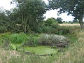 Pond in Snoadhill Farm - geograph.org.uk - 1427849.jpg