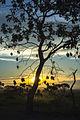 Por do Sol no Paraíso.jpg