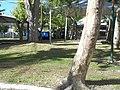 Praia do cassino - panoramio (1).jpg