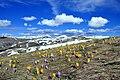 Pranvera në Malet e Sharrit ndërmjet Kosovës dhe Maqedonisë së Veriut.jpg