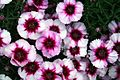 Pretty-flowers - West Virginia - ForestWander.jpg