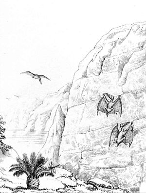 Drawing of pterosaurs by English naturalist Wi...
