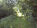 Public Footpath between South Engine Drain and River Torne - geograph.org.uk - 1229883.jpg