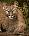 Puma (205773461).jpeg
