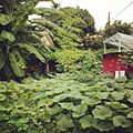 Pumpkins and Bananas at Midtown 34th Street Project Miami Fl.JPG